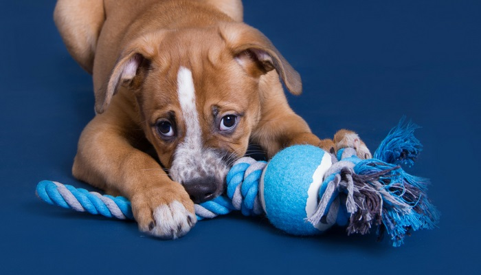 dog rope chew toy