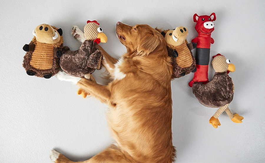 Dog Toys Find the Chicken