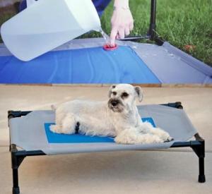 cooling dog bed